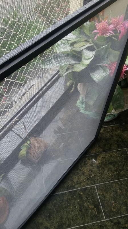 Onde Encontrar Tela Mosqueteira Protetora no Belenzinho - Tela Mosquiteiro para Sacada