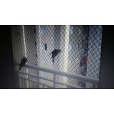 onde encontrar rede de proteção animal em Santana de Parnaíba