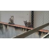 quanto custa redes de proteção anti pássaro em São Bernardo do Campo