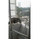 rede proteção janela gatos