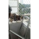 redes de proteção para animais na Higienópolis