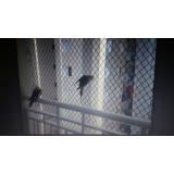 venda de rede proteção animal Aeroporto